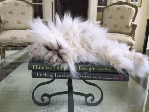 Cute cat alert: check out how our books stack up with this feline