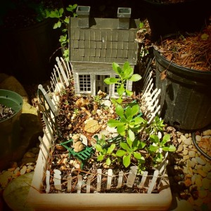 Getting whimsical with miniature gardens