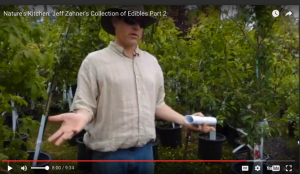 Jeff Zahner's Collection of Edible Shrubs & trees videos and list
