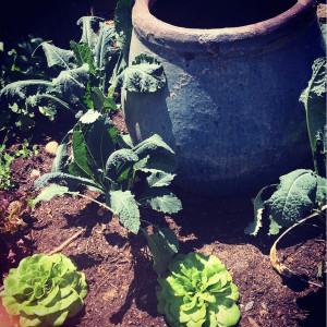 Show Us Your Garden Vegetables